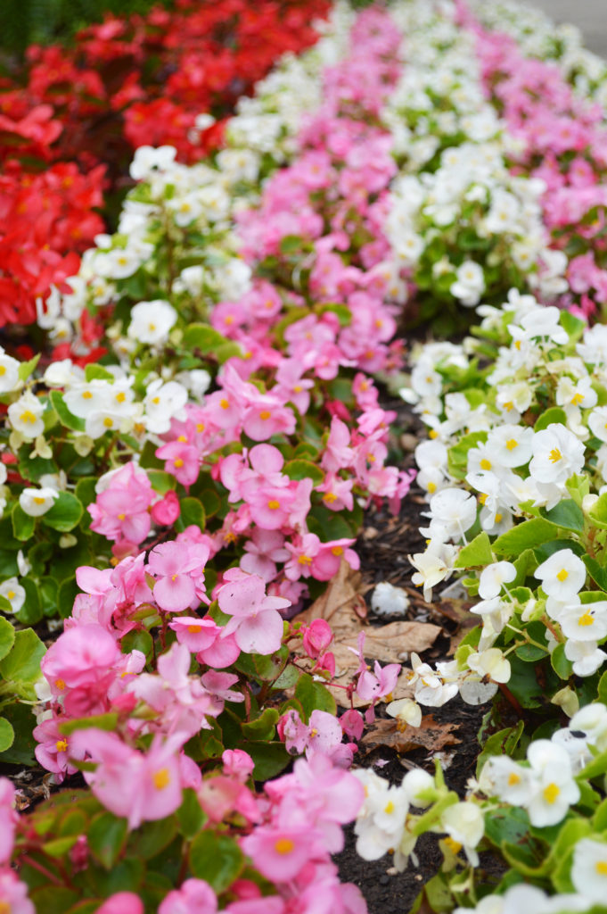 Flowers Central Park Two Rivers